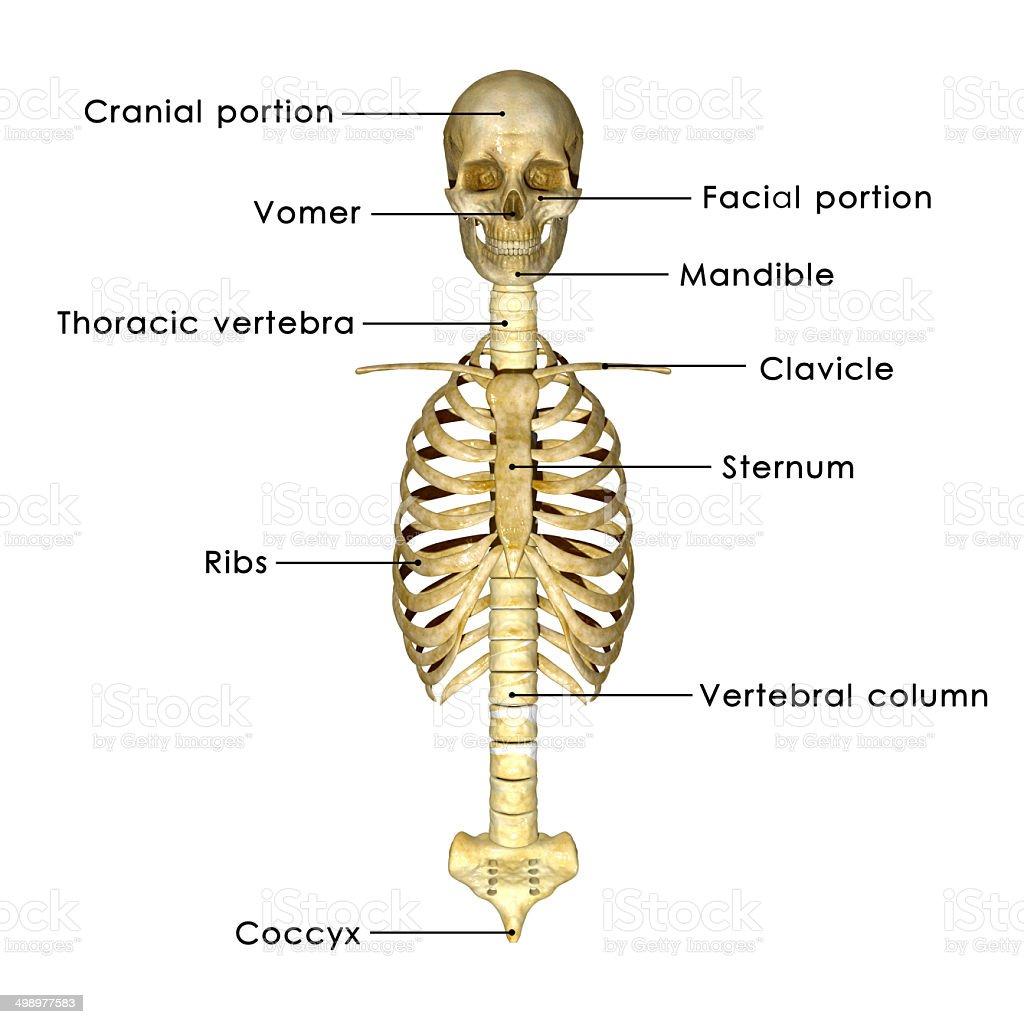 Beste Arten Von Anatomie Bilder - Menschliche Anatomie Bilder ...