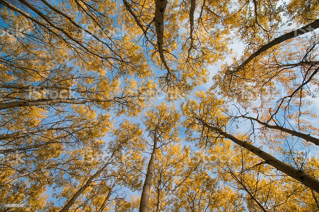 Sky and autumn aspen stock photo
