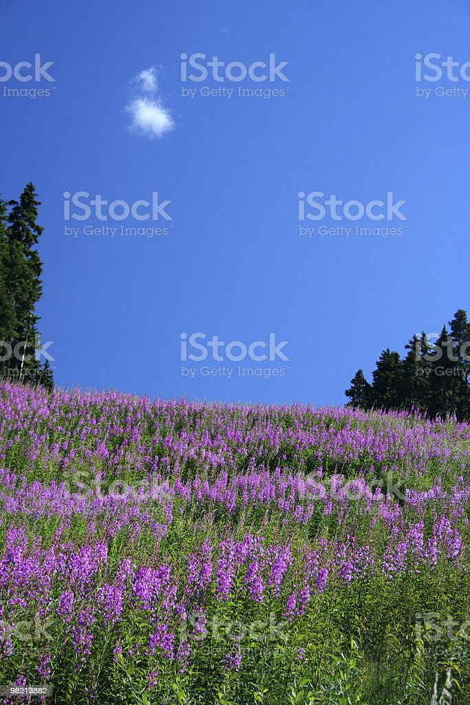 Sky and Flowers royalty-free stock photo