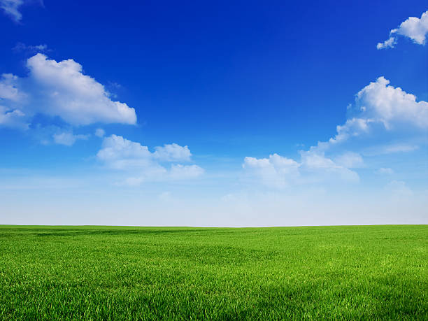 sky and grass backround - field stock photos and pictures