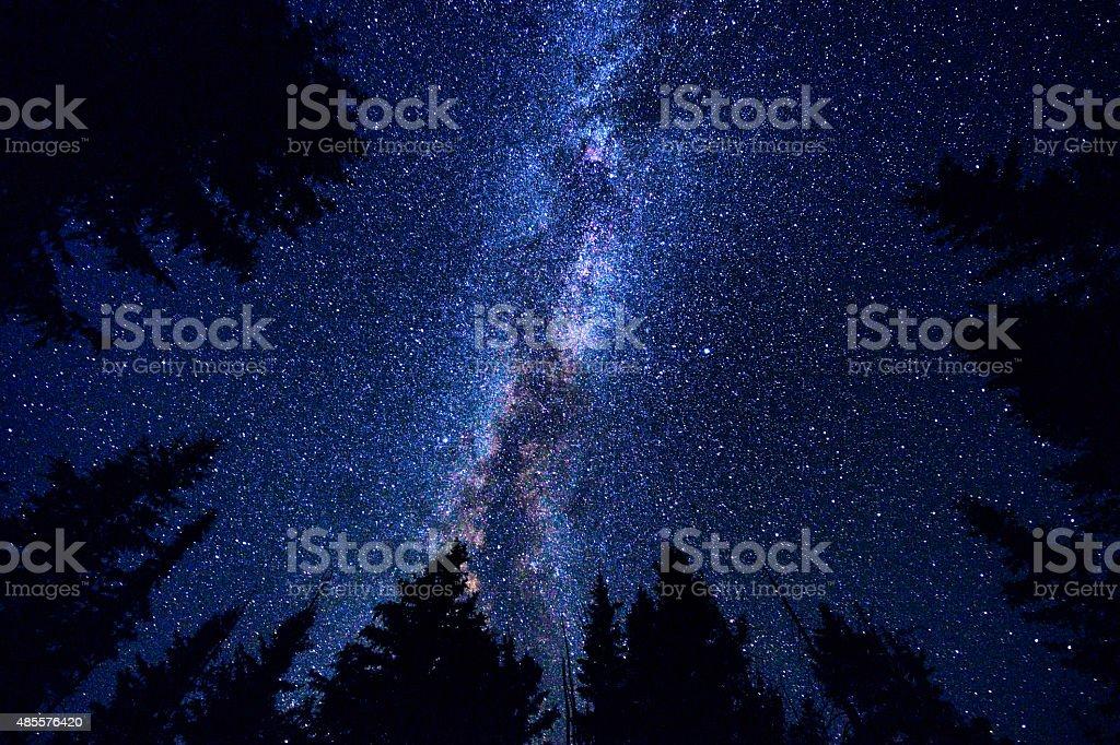 Ciel et de la forêt dans la nuit avec la voie lactée Galaxy - Photo
