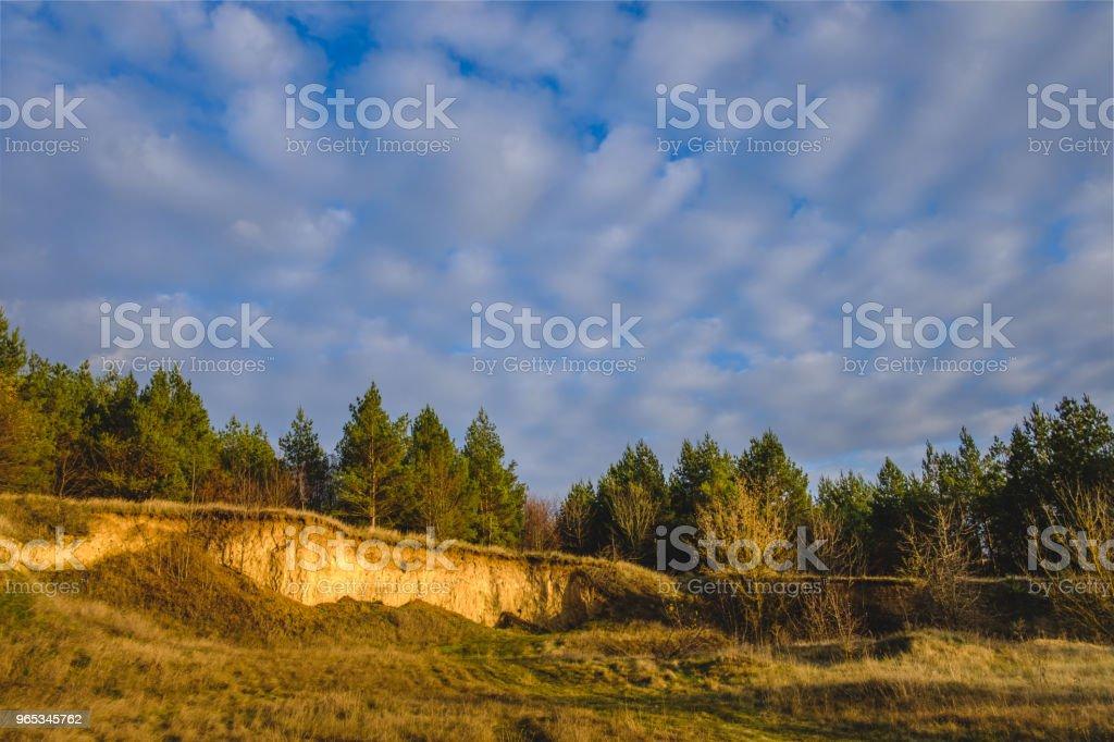 하늘과 소나무 숲 - 로열티 프리 가문비나무 스톡 사진