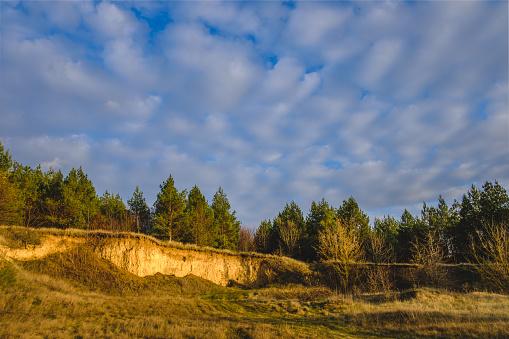 하늘과 소나무 숲 가문비나무에 대한 스톡 사진 및 기타 이미지