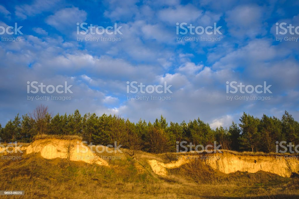 sky and pine forest royalty-free stock photo