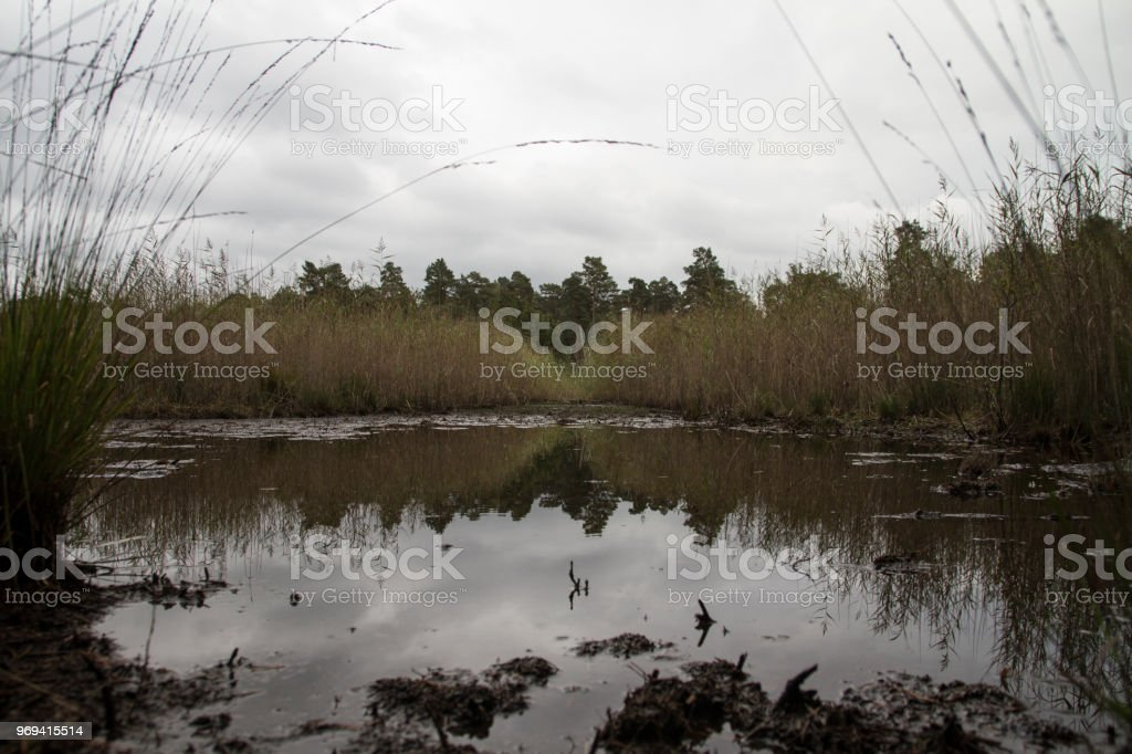 Sky and reeds reflected in pond stock photo