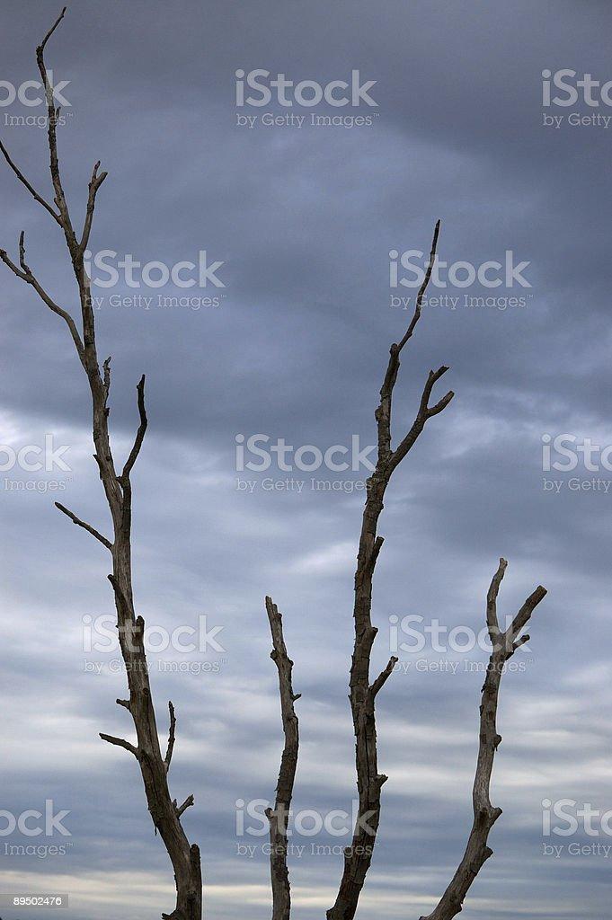 sky and tree royalty free stockfoto