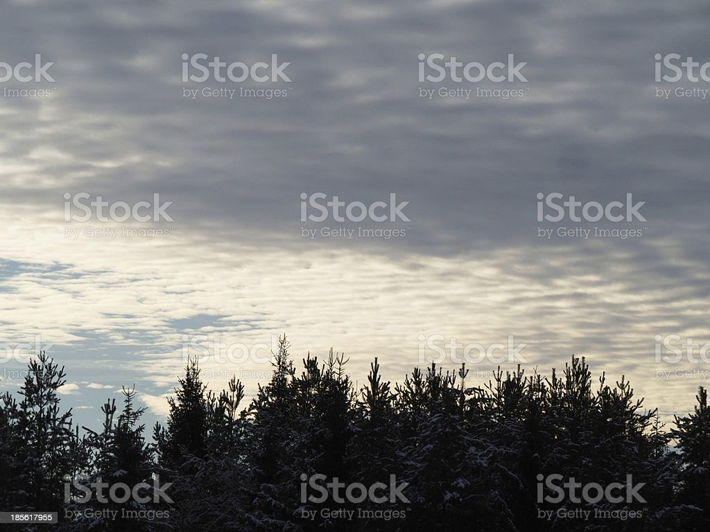 sky and tree tops royalty-free stock photo