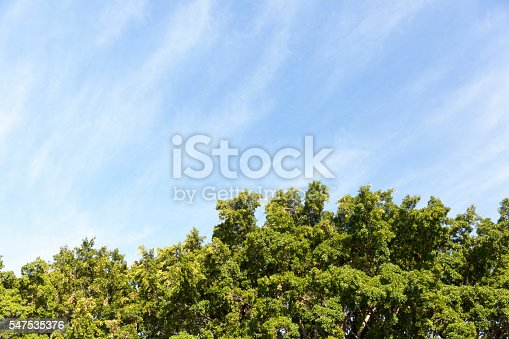 Sky and trees, beautiful nature background, full frame horizontal composition with copy space