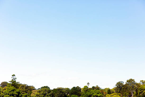Sky and trees, nature bautiful background, copy space stock photo