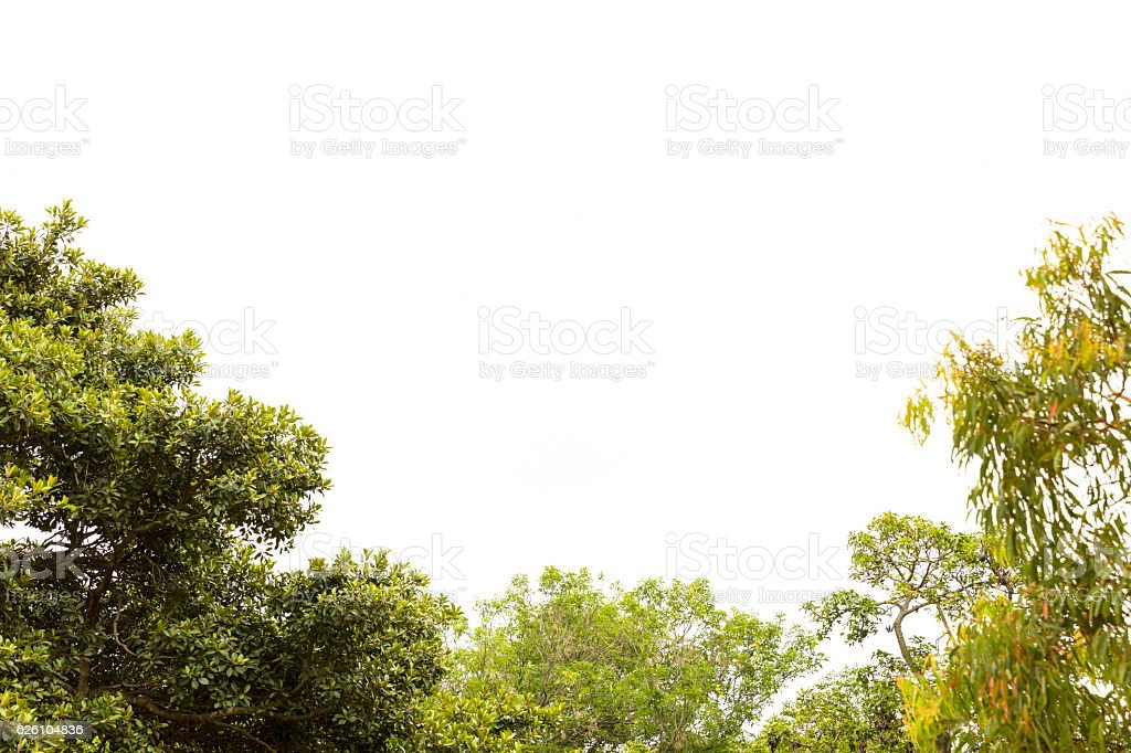 Sky and trees, nature bautiful background with copy space – Foto