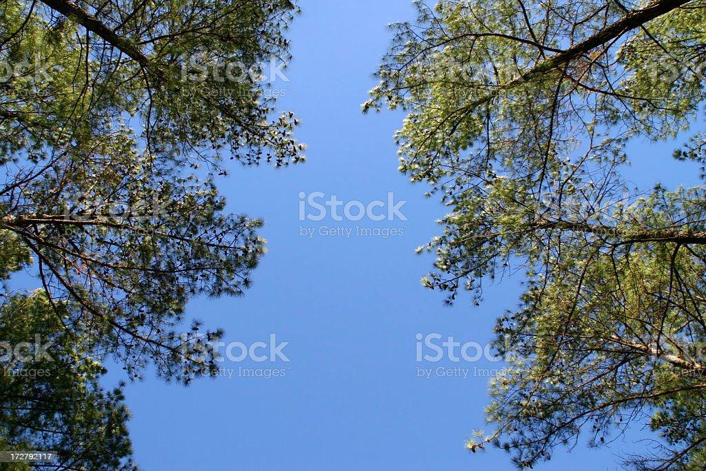 Sky and trees royalty-free stock photo