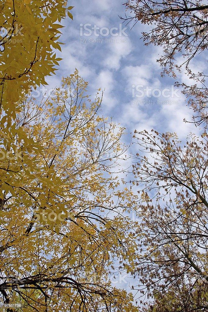 Ciel et les arbres photo libre de droits