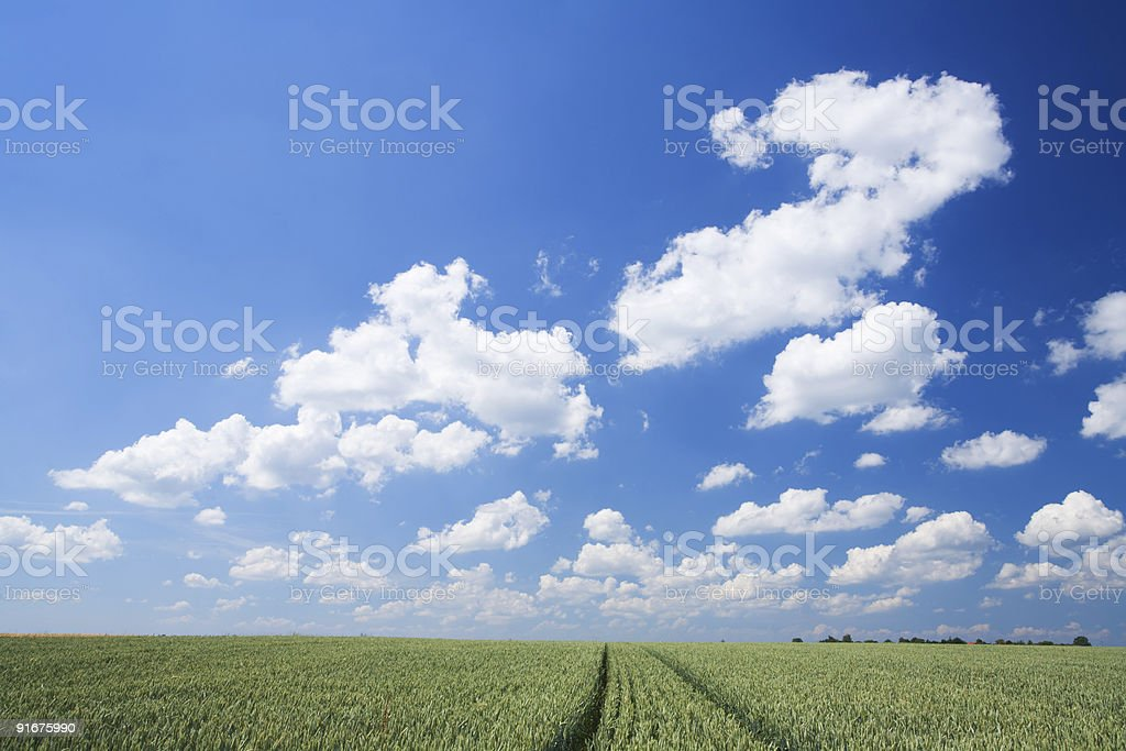 sky and wheat field royalty-free stock photo