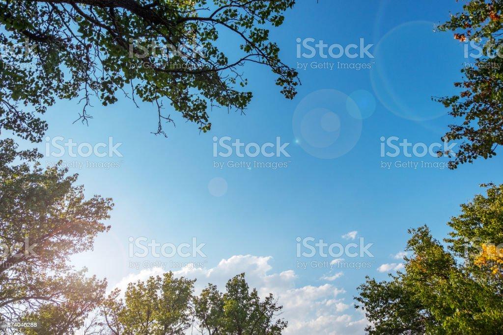 Sky zwischen Bäumen – Foto