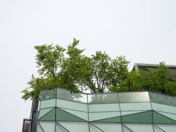 sky garden auf dach - dachgarten stock-fotos und bilder