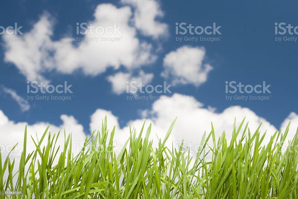 Sky Grass royalty-free stock photo