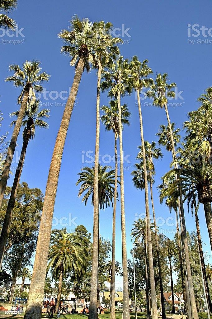 sky high palm trees royalty-free stock photo