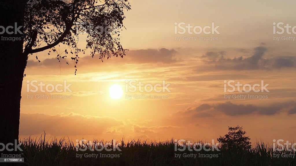 Sky in the evening of winter with a big trees stock photo