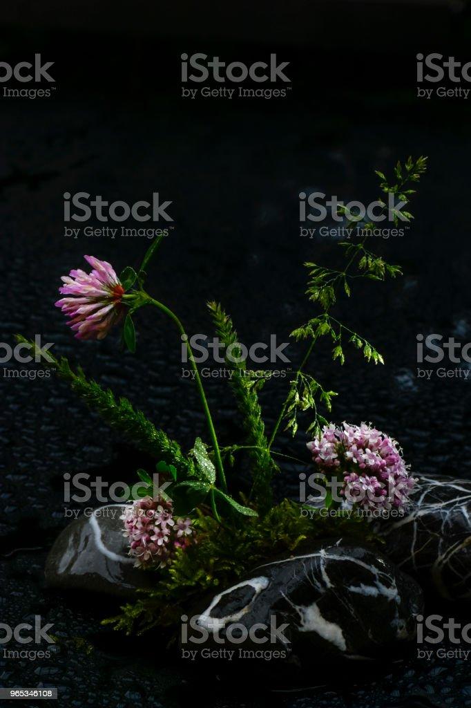 clé de ciel - Photo de Arbre en fleurs libre de droits