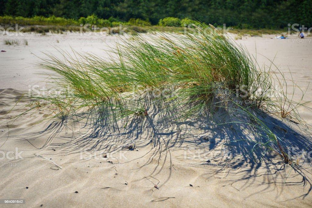 sky over dunes - Royalty-free Beach Stock Photo