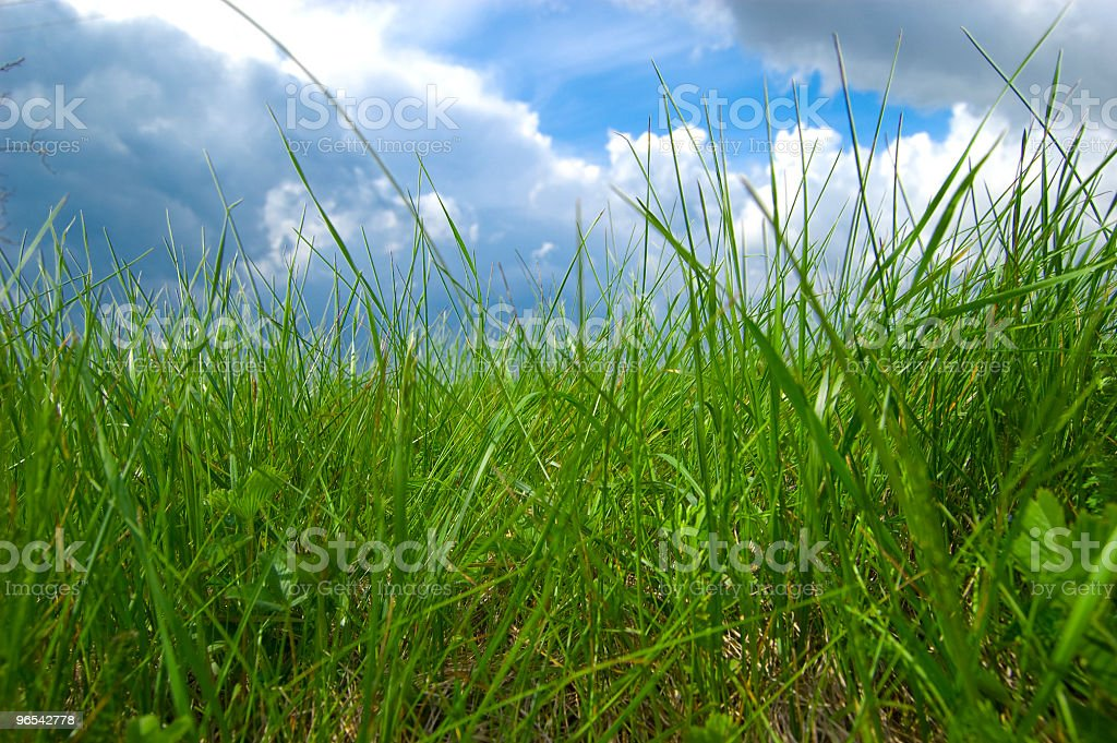sky over grass royalty-free stock photo