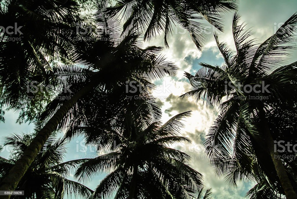 sky palm stock photo