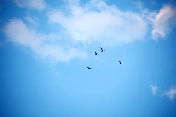 sky - foto de acervo