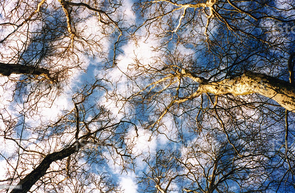 sky through branches royalty-free stock photo