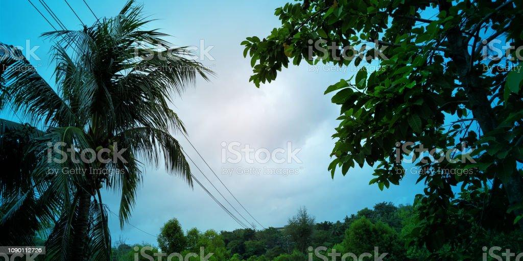 Vista do céu em floresta - foto de acervo