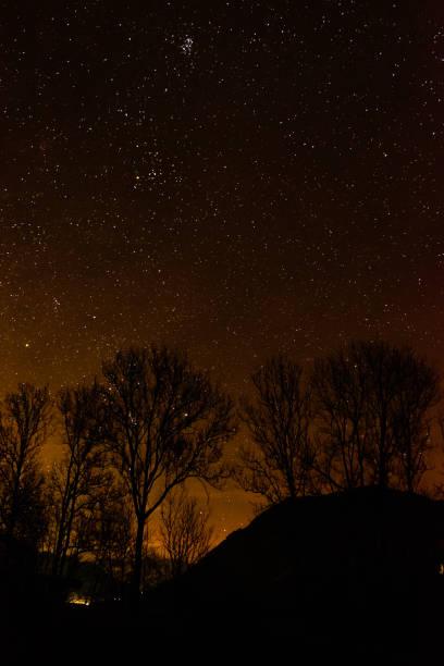 Blick in den Himmel in einer klaren Nacht mit einigen Bäumen im Vordergrund – Foto