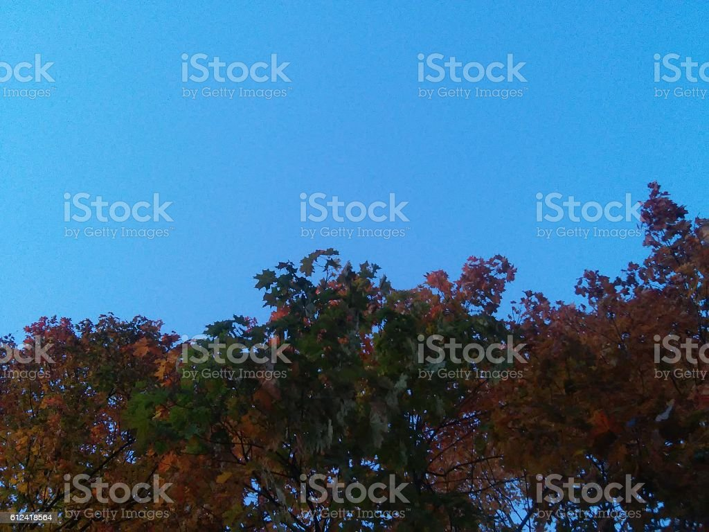 Sky with colorful leaves stock photo