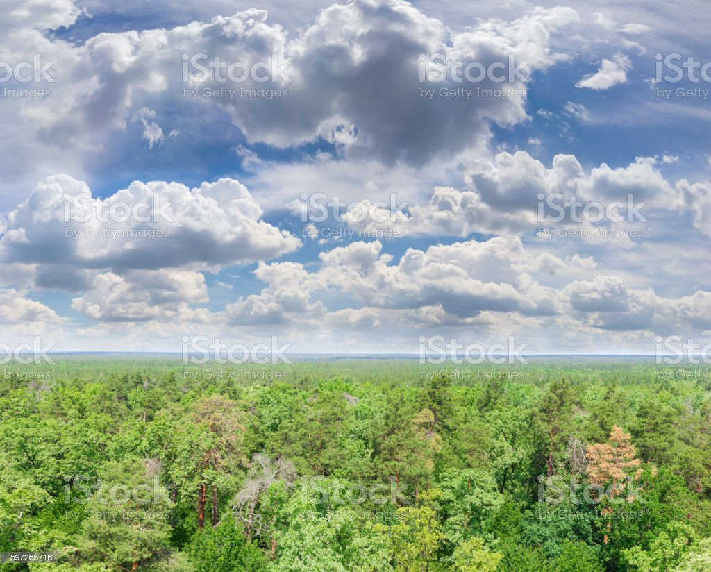Sky with cumulus clouds over forest royalty-free stock photo