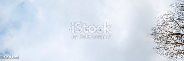Banner of sky with early spring forest. Great background with copyspace. Nature landscape. Stock photo.