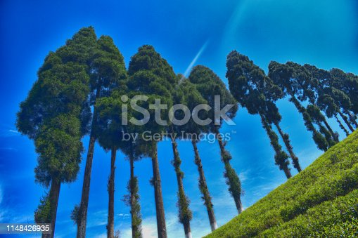 This tea garden is located in Mirik. Mirik is a small hill town and part of Kurseong subdivision and part of Darjeeling district.