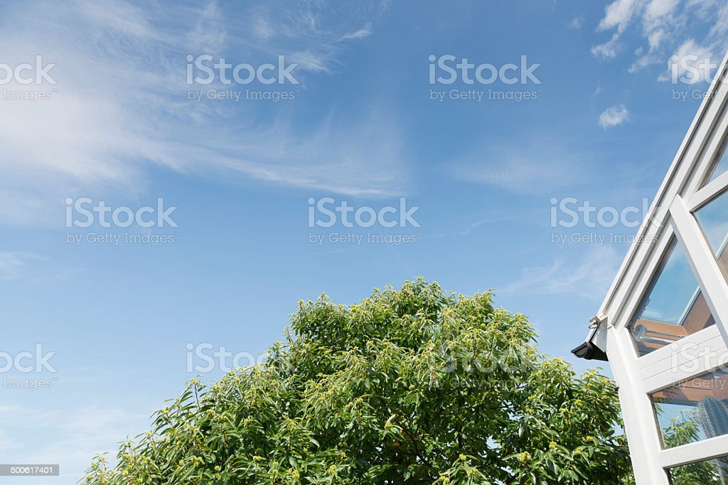 Sky with tree and winter garden stock photo