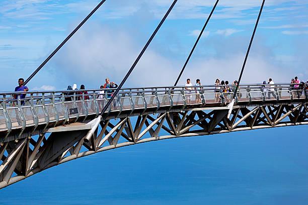 skybridge mit panoramablick - baumwipfelpfad stock-fotos und bilder