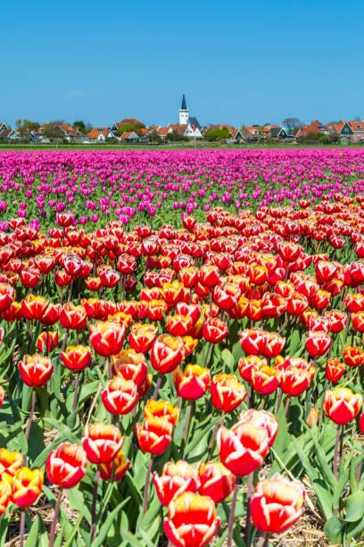Skyline van Den Hoorn Texel Nederland foto