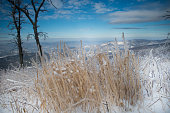 Skyline Drive - Winter