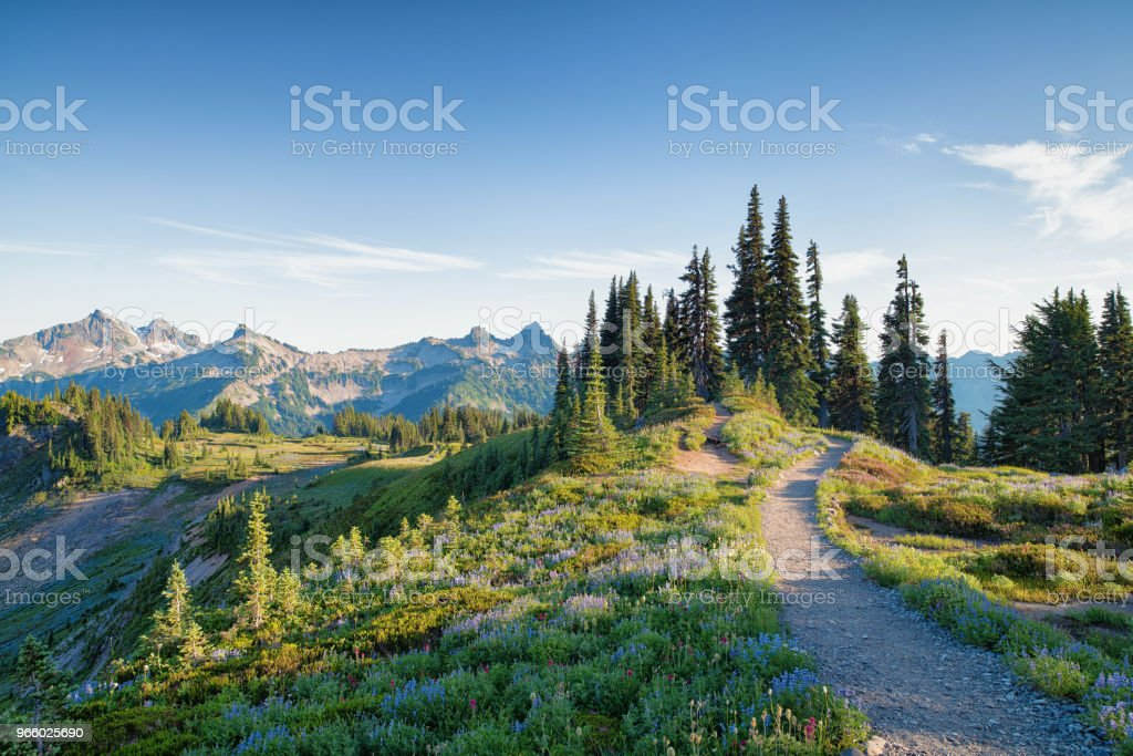 Skyline Trail in Mount Rainier - Royalty-free Alberta Stockfoto