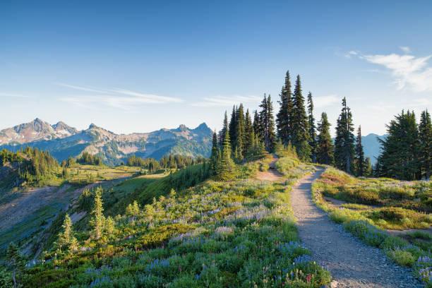 skyline trail in mount rainier - góry kaskadowe zdjęcia i obrazy z banku zdjęć