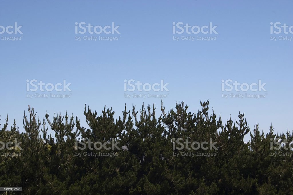 Skyline with pine trees. royalty-free stock photo