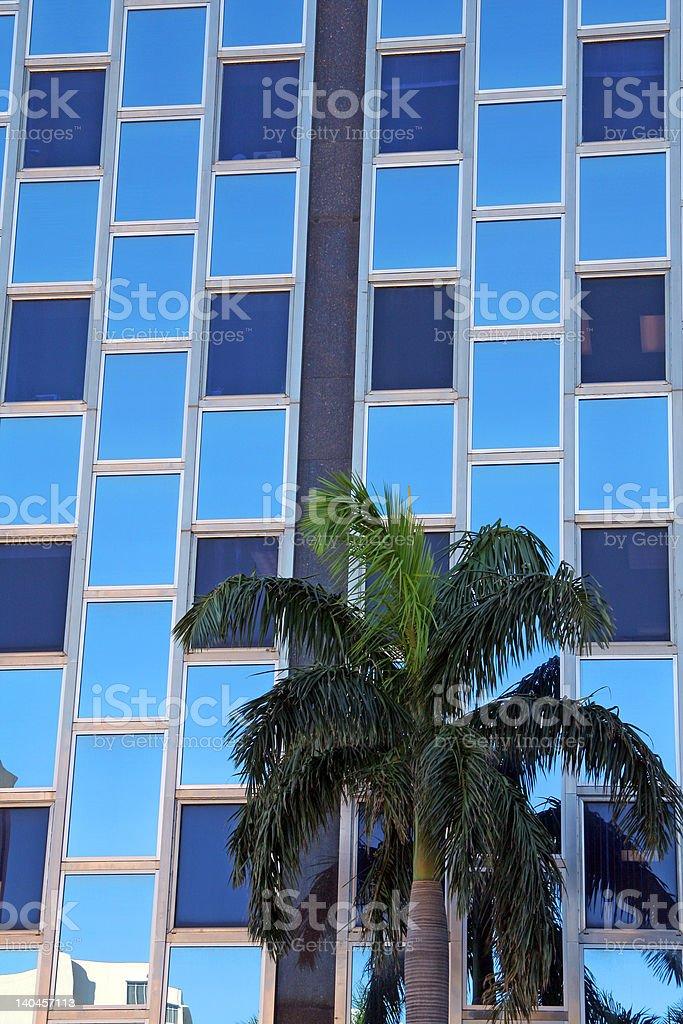 Skyscraper and a palm stock photo