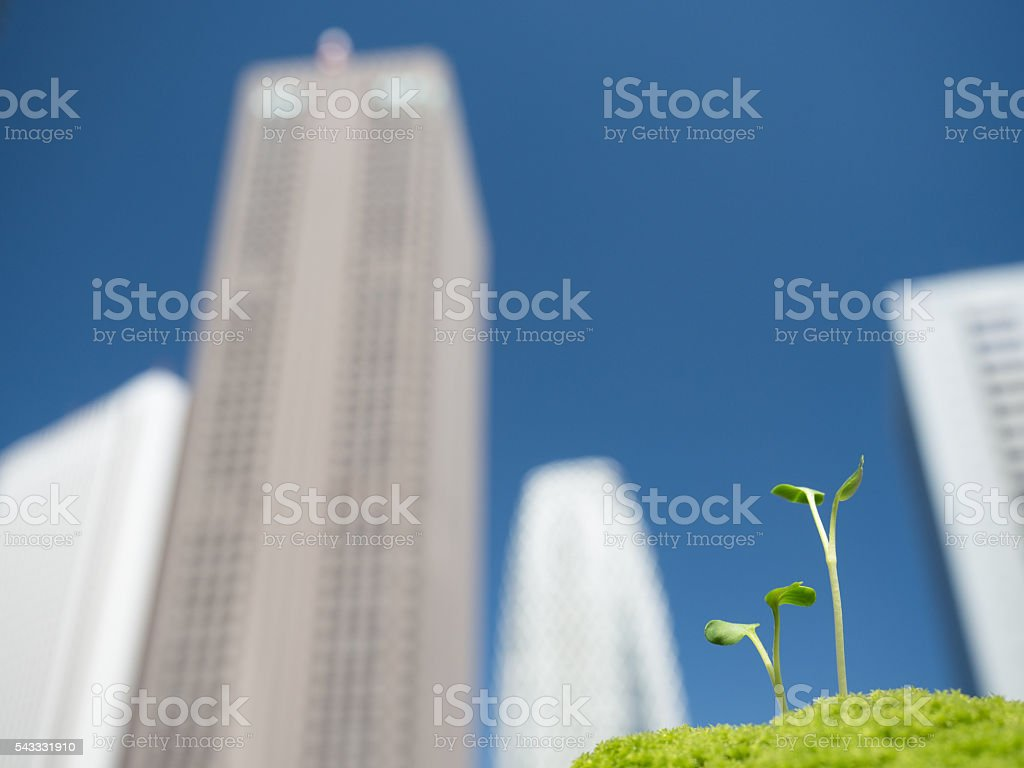 Skyscrapers and seedlings stock photo