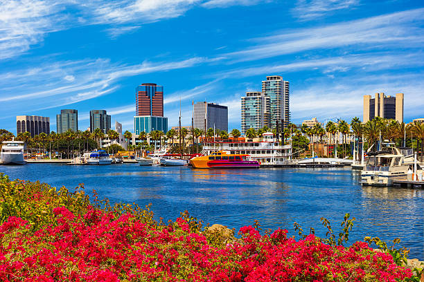 Skyscrapers of Long Beach skyline,harbor,boats,spring,California Rainbow Harbor at Long Beach Marina with spring flowers in foreground leading back to moored yachats in below  the city skyline, California long beach california stock pictures, royalty-free photos & images