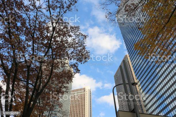 Skyscrapers with fall leaves in Shinjuku, Tokyo, Japan
