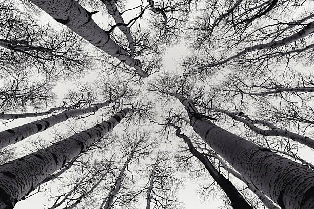 Skyward aspen grove picture id618316086?b=1&k=6&m=618316086&s=612x612&w=0&h=1ry9spjsg0sftgkiemckoatuizbgh4upvy4xsr80ncq=