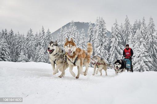 Slad dog race, Tusnad, Romania, 2018