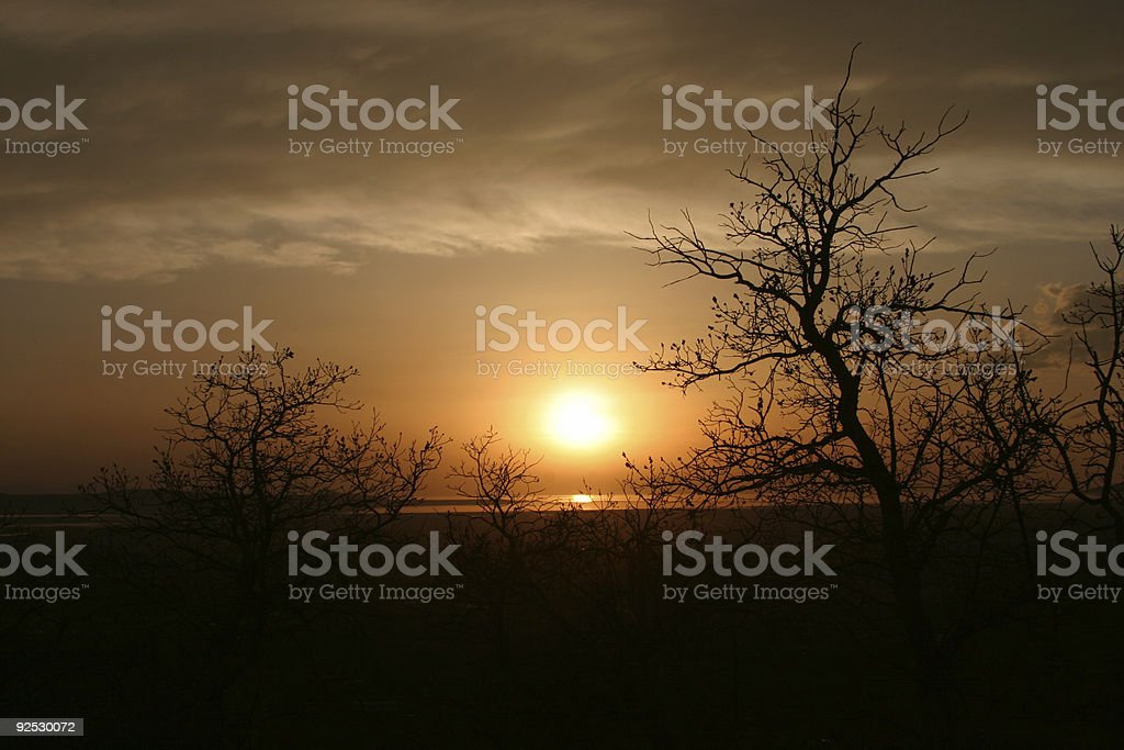 sLandscape of Tangled Wood Silhouetted by Setting Sun royalty-free stock photo