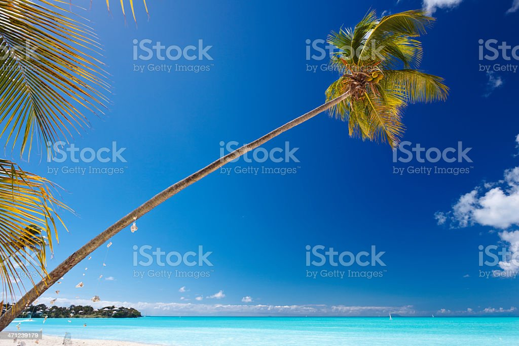 Slanted Palm Tree At Caribbean Beach royalty-free stock photo