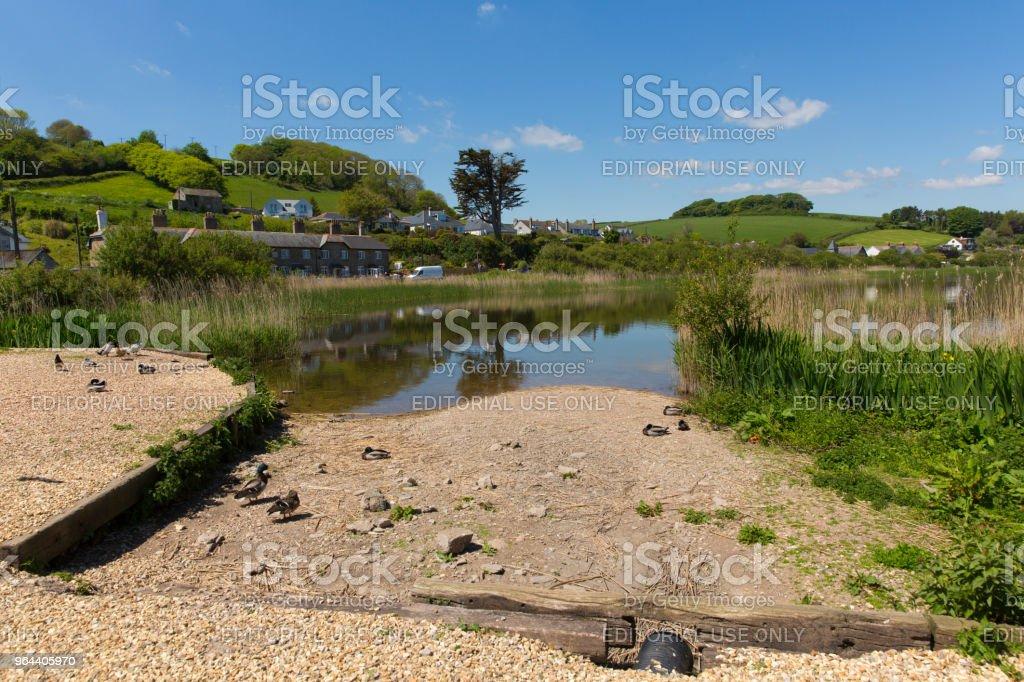 Slapton Ley nature reserve Torcross near Slapton Sands Devon UK - Royalty-free Agricultural Field Stock Photo